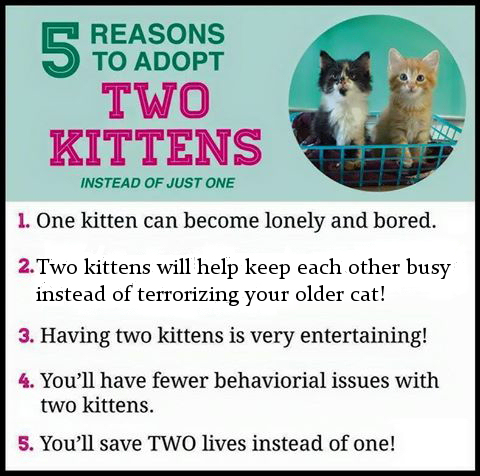 Kittens must be adopted in pairs